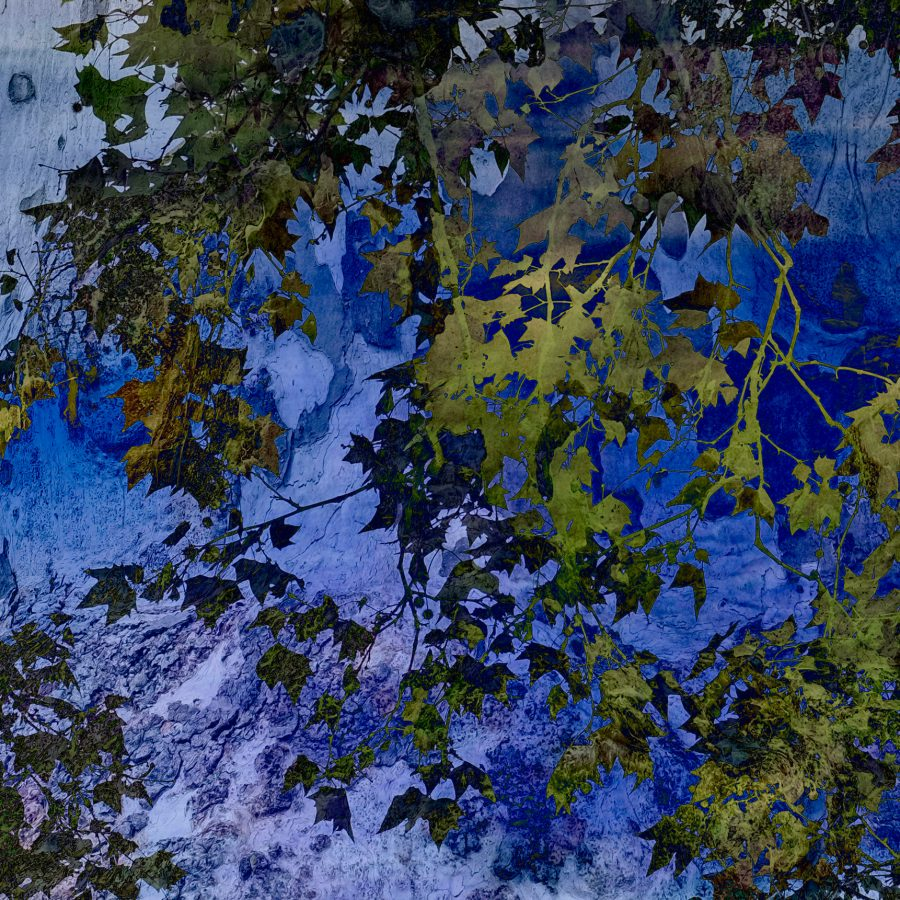 tree-bark-leaf-leaves-blue-green-abstract-nature