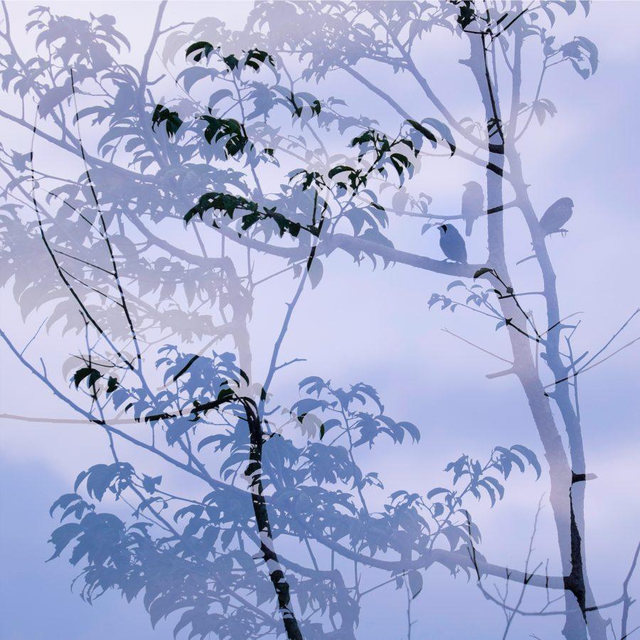 shadow-twilight-silhouette-birds-leaves-dusk