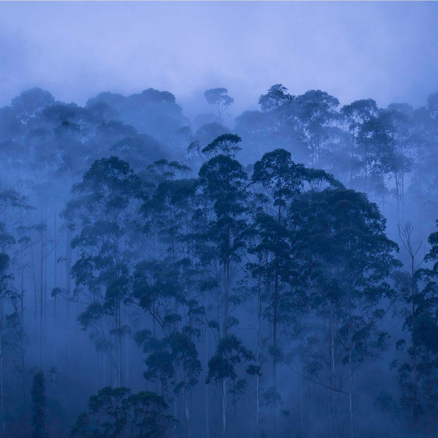 dusk-blue-twilight-teacountry-sri-lanka