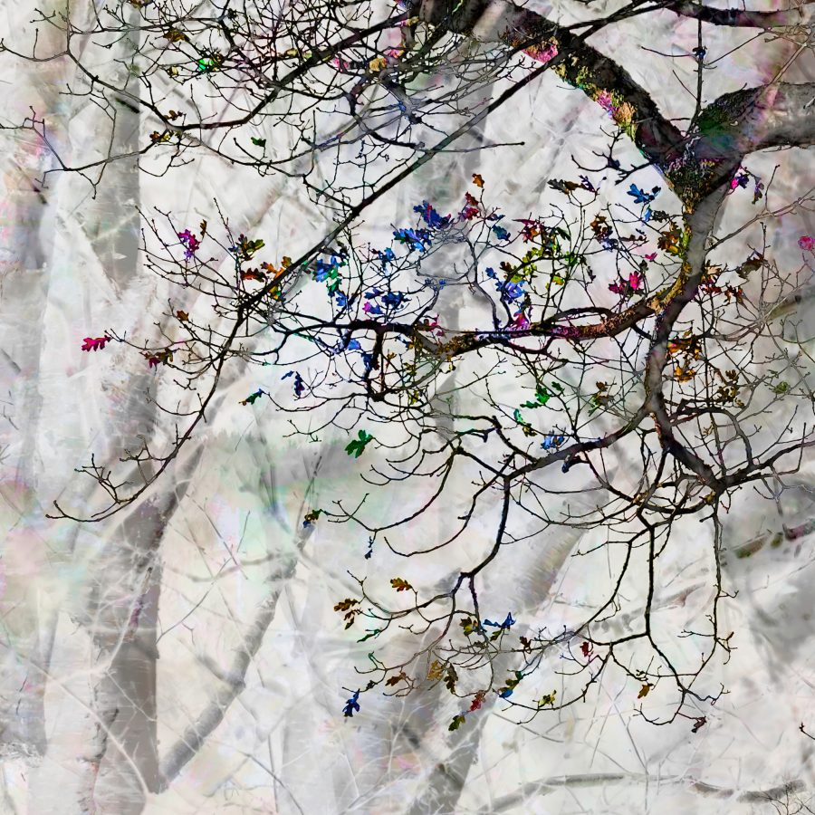 rainbow-multicoloured-branches-tree-enhanged-magical