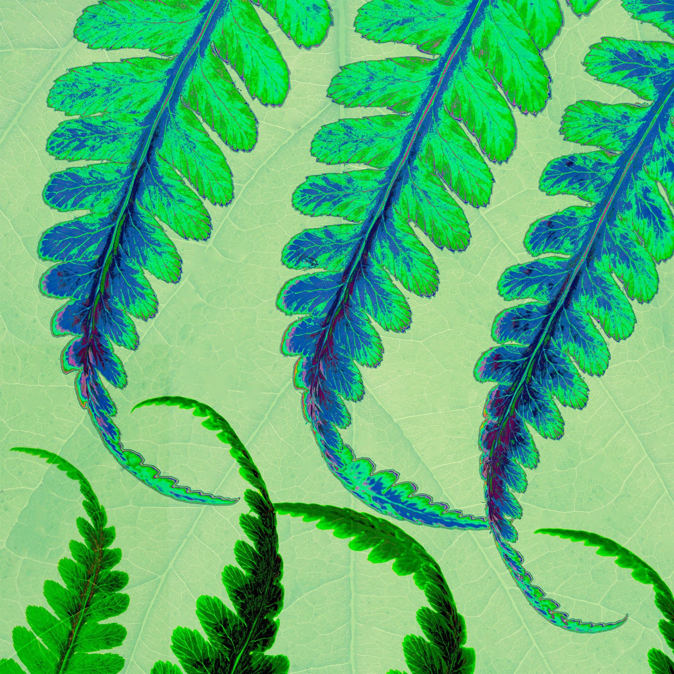 Hanging Ferns Blue