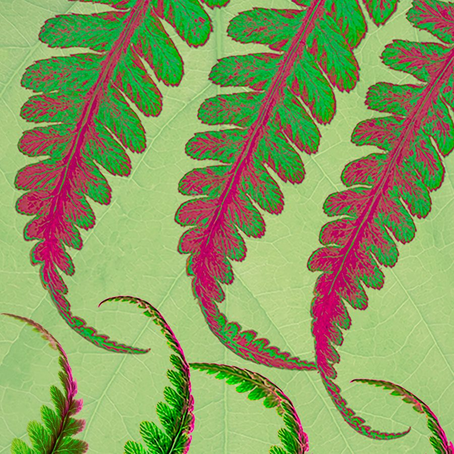 fern-ferns-fronds-decorative-details-macro-hotpink-lime