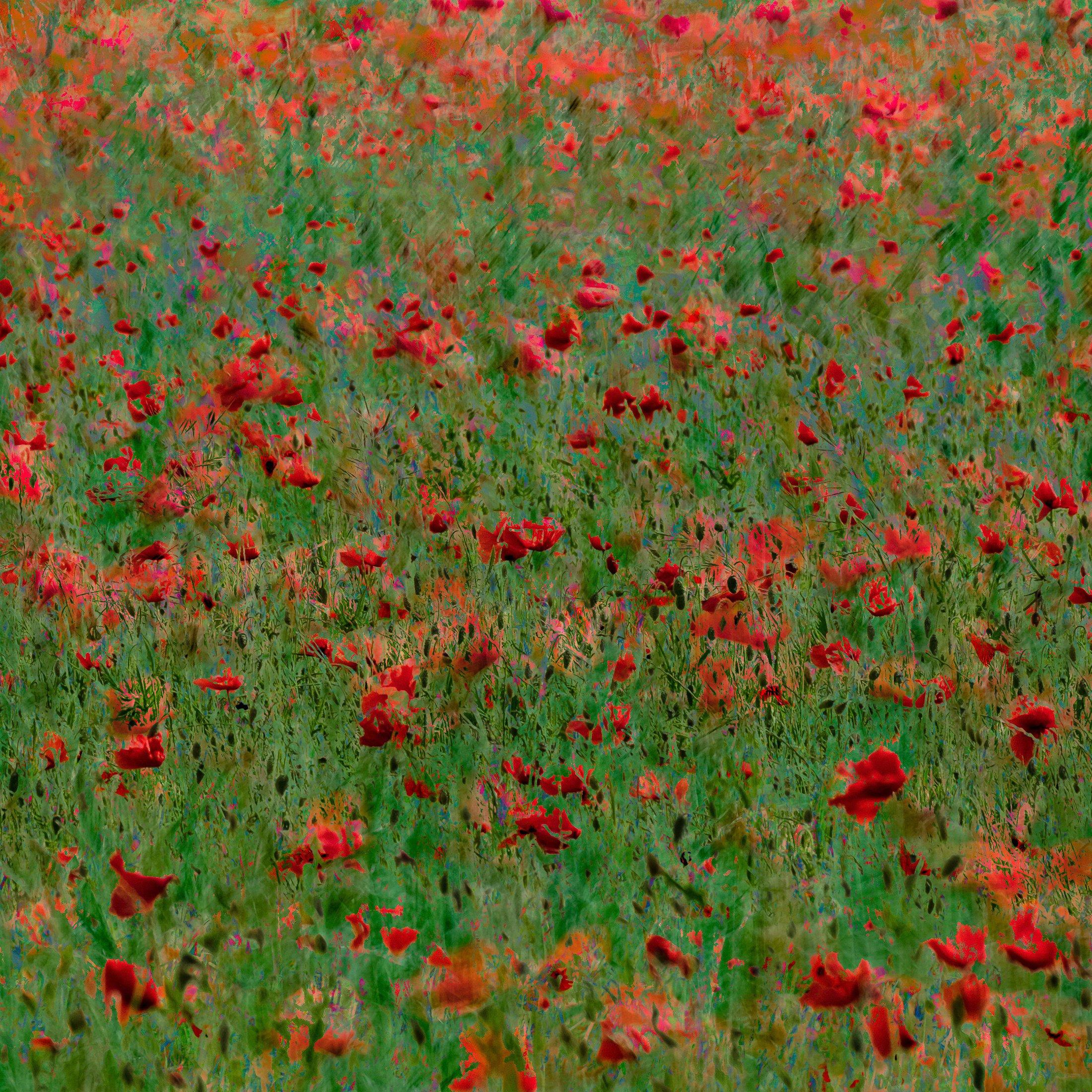 Poppy Population