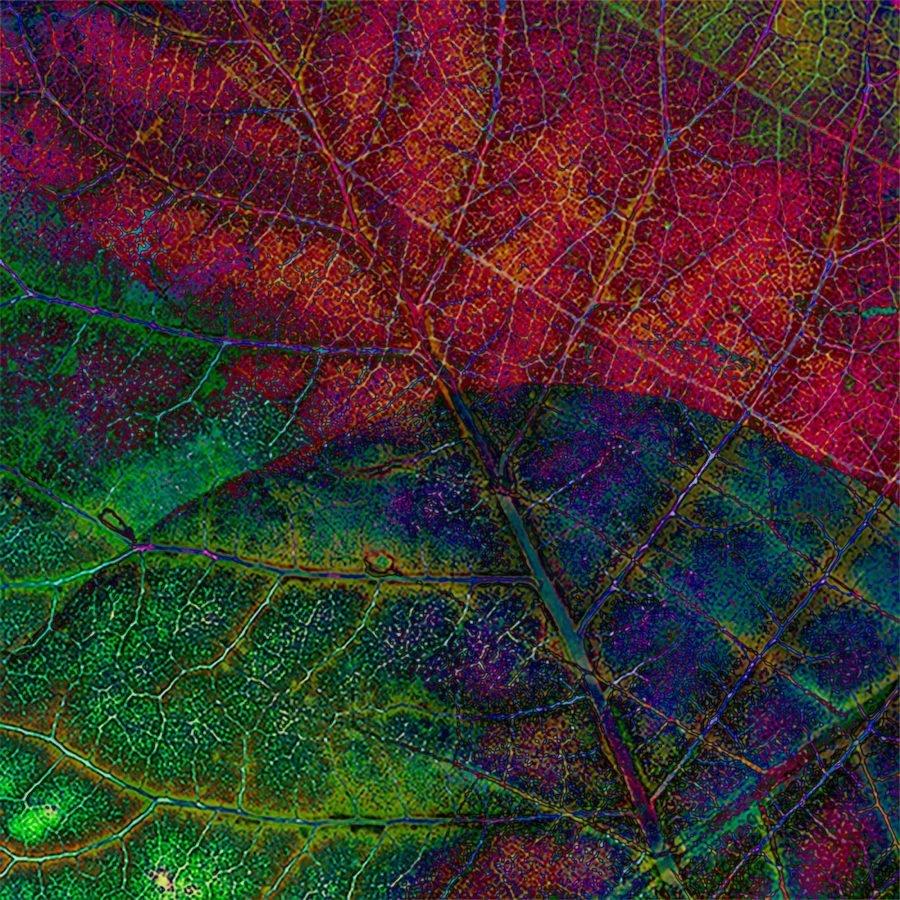 leaf-leaves-macro-details-rainbow-jewelcolours