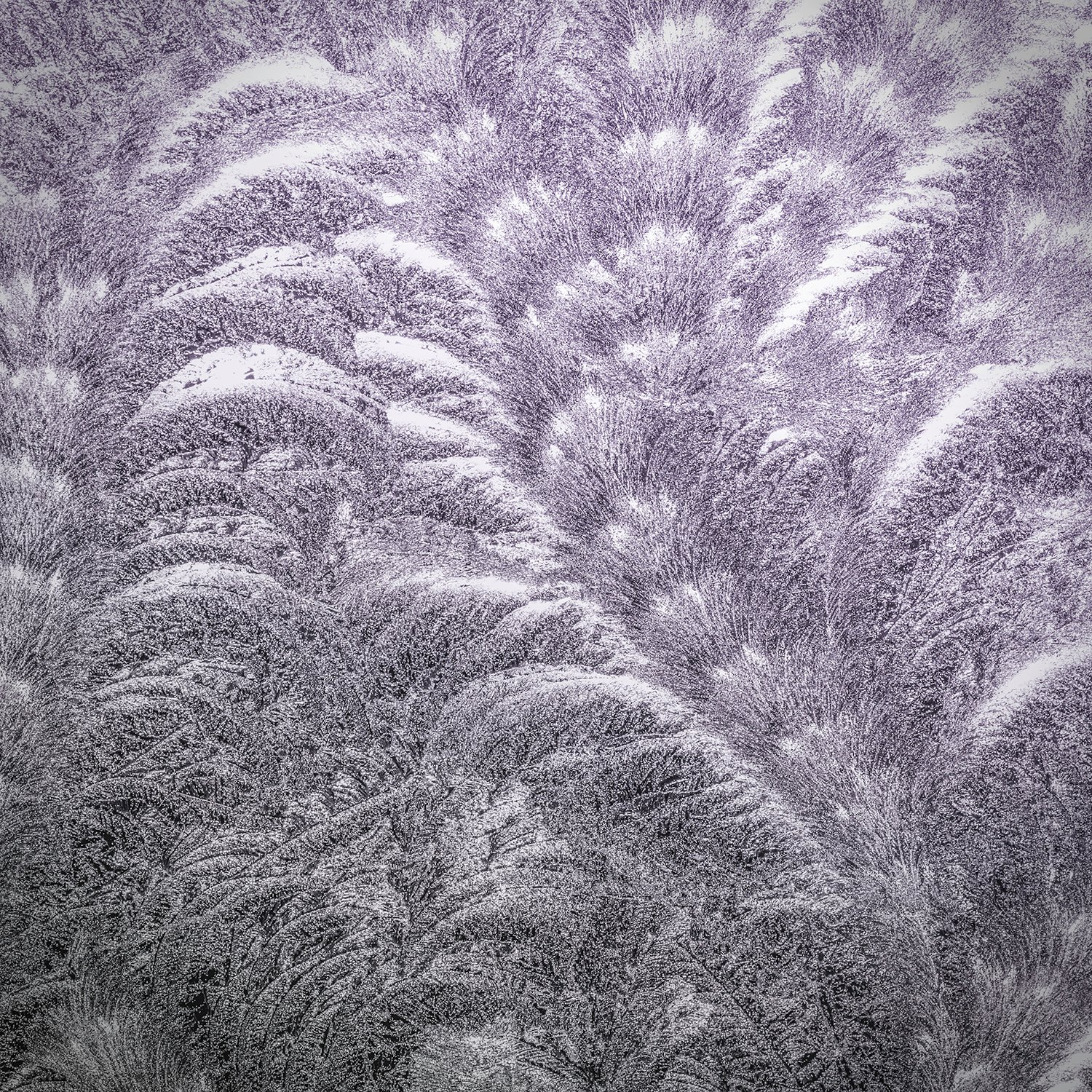 texture-textures-pressed-glass-frost-patterns-scroll-fern-lavender-purple-ombre-black-grey