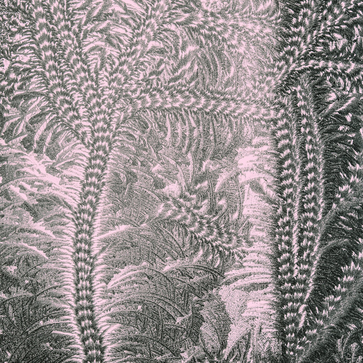 texture-textures-pressed-glass-frost-patterns-scroll-fern-pink-grey-pale-charcoal