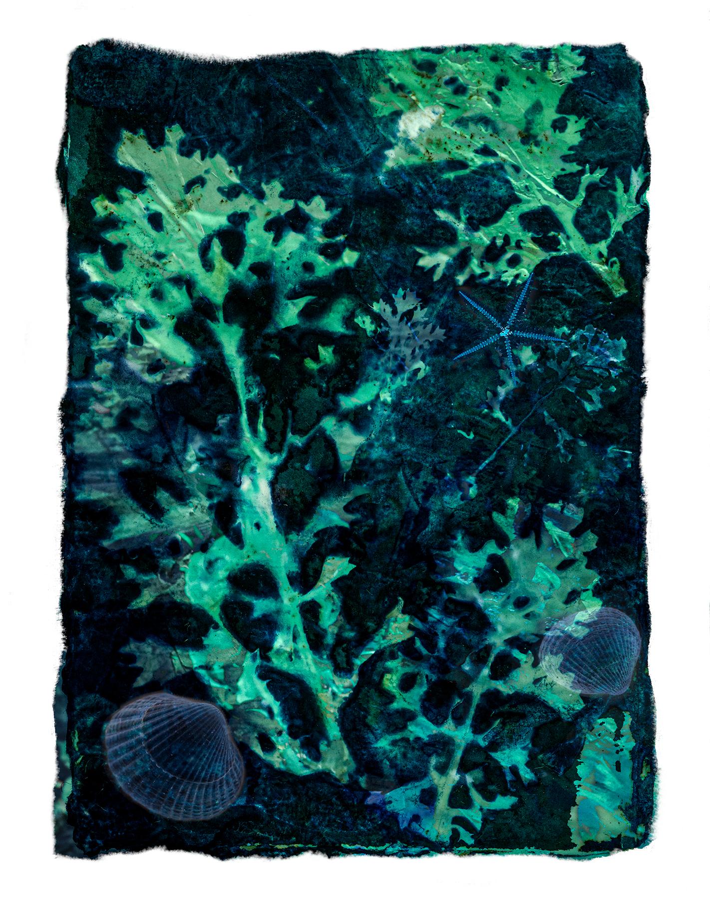 Deep Impressions, Ink & Lagoon